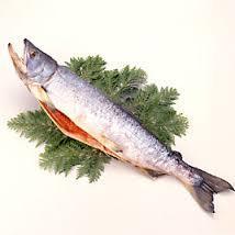 鮭2.jpg