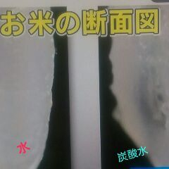 炭酸4.jpg